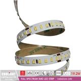 2835 LED Strip-160LED m 24V CRI95 R1-R1590 19.2W FULL SPECTRUM SMD LED STRIP